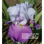 Summer Magic Iris