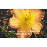 Autumn Wood Daylily