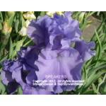 Breakers Iris