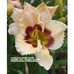 Carolina Low Country Daylily