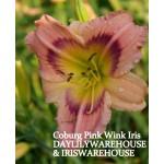 Coburg Pink Wink Daylily