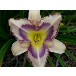 Destined to See Daylily