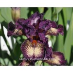 Devils Playgound Iris