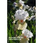 Frontier Lady Iris