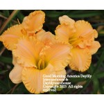 Good Morning America Daylily