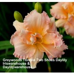 Greywoods Tootsie Two Shoes Daylily