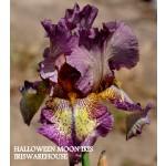 Halloween Moon Iris