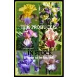 Wine spritzer iris