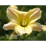 Jewel Case Daylily