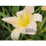 Lenox Daylily