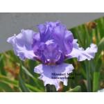 Missouri Mist Iris