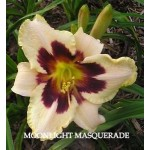 Moonllight Masquerade Daylily