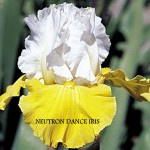 Neutron Dance Iris