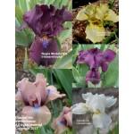 Iris Pastel Median Collection