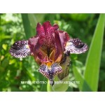 Rayos Adentro Iris