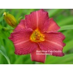 Red Wine Cup Daylily