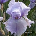 Rio Vista Iris