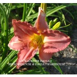 Rock Lobster Daylily