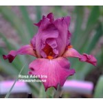 Rosa Adell Iris