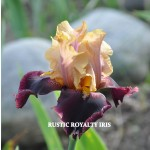 Rustic Royalty Iris