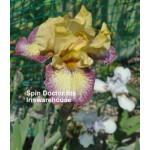 Spin Doctor Iris