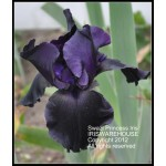 Swazi Princess Iris
