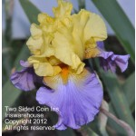 Two Sided Coin Iris