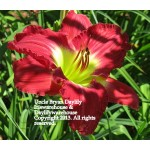 Uncle Bryan Daylily