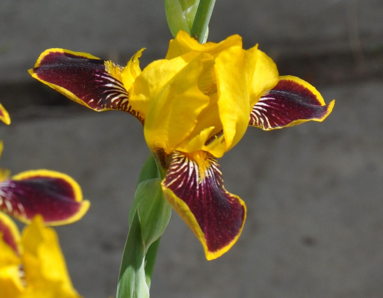 Bumblebee Deelight