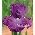 Aristocracy Iris