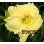 Brocaded Gown Daylily