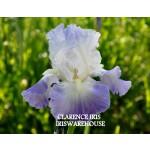 Clarence Iris