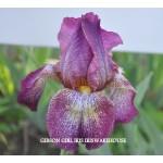 Gibson Girl Iris