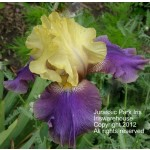 Jurassic Park Iris