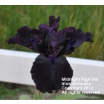 Midnight Vigil Iris