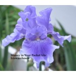 Money In Your Pocket Iris