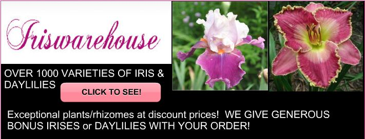 buy iris daylilies online home page. Black Bedroom Furniture Sets. Home Design Ideas